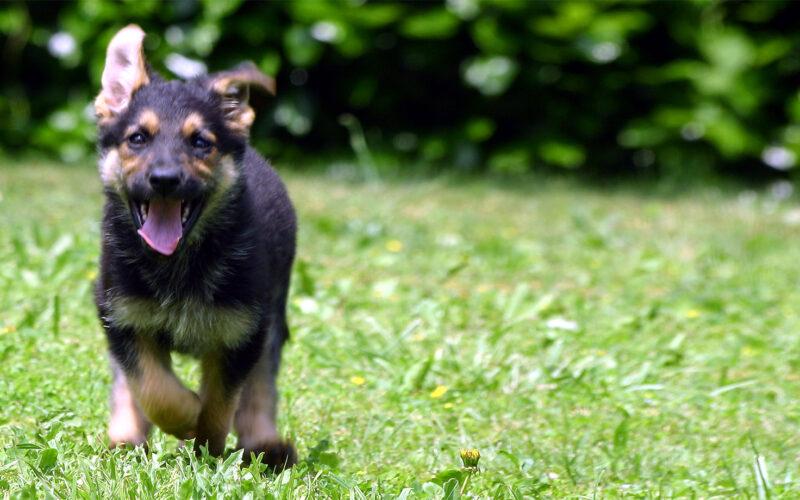 5 dicas de marketing digital para o seu centro veterinário